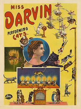 Title: MISS DARVIN PERFORMING CATS